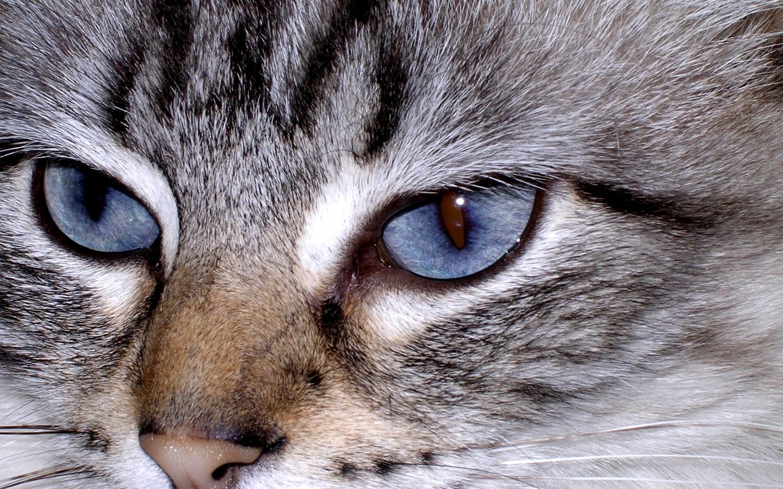 Gratuit fond ecran animaux pc portable 1280x800 1440x900 for Fond ecran gratuit animaux